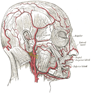 Long Island Physical Therapy for facial nerve issues
